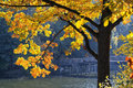 Autumn Tree Stock Images - 68153734