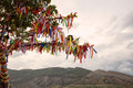 The Sacred Wishing Tree Of Desires And Dreams Royalty Free Stock Image - 68192046