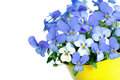 Pansies Violets Flowers Royalty Free Stock Photography - 68284927
