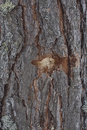 Bullet Hole In Tree Stock Photos - 68318503