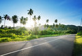 Empty Road In Jungle Stock Image - 68326521