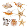 Collage Of Sea Shells Isolated On White Background Royalty Free Stock Photography - 68366297