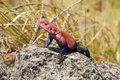 Spider-man Agama Lizard Royalty Free Stock Image - 68453116