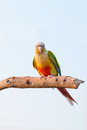 Parrot Stock Image - 68456341