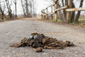 Big Horse Droppings On An Asphalt Road Stock Image - 68465651