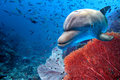 Dolphin Underwater On Blue Ocean Background Royalty Free Stock Photography - 68534917