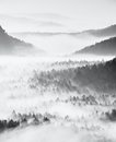 Dreamy Misty Forest  Landscape. Majestic Peaks Of Old Trees  Cut Lighting Mist. Deep Valley Is Full Of Colorful Fog Stock Photo - 68563260