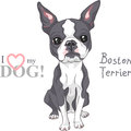 Vector Sketch Dog Boston Terrier Breed Serious Royalty Free Stock Photography - 68580037