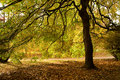 Under Spreading Chestnut Boughs Stock Photography - 6862272