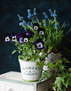 Pansy And Muscari Royalty Free Stock Photos - 68618898