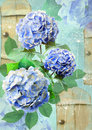 Floral Postcard. Can Be Used For Greeting Or Invitation Card, Mothers Day, Valentines Day, Birthday Cards, Gift Warp. Royalty Free Stock Images - 68690549