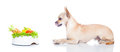 Hungry Dog With Bowl Royalty Free Stock Photography - 68760887