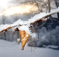 Frozen Leaf On The Tree Royalty Free Stock Photo - 68787275
