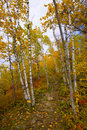 Gateway To An October Trail Royalty Free Stock Images - 6880349