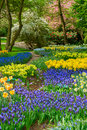Blue Flowers In Holland Garden Stock Image - 68842871