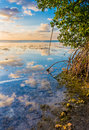 Colorful Sky Reflected In Water Of Mangrove Lagoon Royalty Free Stock Photos - 68863448