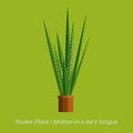 Vector Flat Illustration Of Indoor Homeplant Snake Plant In Pot Royalty Free Stock Photo - 68874575