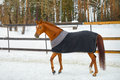 The Horse In The Blanket Stock Photography - 68879872