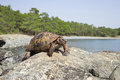 Land Turtle. Royalty Free Stock Photography - 68896617