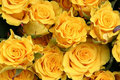 Yellow Roses Royalty Free Stock Photography - 691377