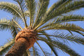 Palm Tree Against Sky Stock Images - 696314