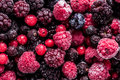 Frozen Summer Forest Wild Berries Fruits, Full Frame Background Royalty Free Stock Photos - 69009188