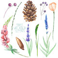 Set, Collection With The Isolated Watercolor Forest Elements (berries, Cones, Lavender, Wildflowers And Branches) Stock Photos - 69035133