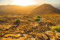 Volcanic Landscape On Lanzarote Island Royalty Free Stock Photography - 69082917