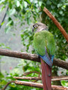 Parrot Royalty Free Stock Image - 69109826