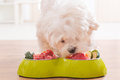 Dog Eating Natural Food From A Bowl Royalty Free Stock Photography - 69112797