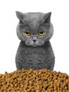 Cat Is Hungry And  Going To Eat Royalty Free Stock Image - 69139666