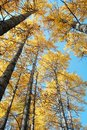 Autumn Forests Royalty Free Stock Image - 6922076