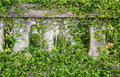 Grass On The Fence Of The Old Prison In Con Dao Island Royalty Free Stock Photo - 69209215