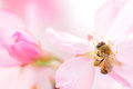 Bee And Flower Stock Photography - 69289322