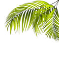 Leaves Of Palm Tree Stock Photo - 69297200