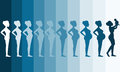 Changes In A Woman S Body In Pregnancy,Silhouette Pregnancy Stages, Vector Illustrations Royalty Free Stock Photo - 69322235