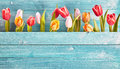 Still Life Border Of Colorful Fresh Spring Tulips Royalty Free Stock Photography - 69366697