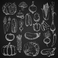 Chalk Sketches Of Farm Vegetables Stock Photography - 69394412