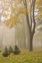Autumn Park Royalty Free Stock Images - 6949649