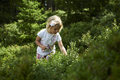 Child Blond Little Girl Picking Fresh Berries On Blueberry Field In Forest. Stock Photography - 69401452