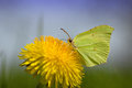 Butterfly Stock Image - 69406801