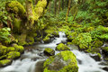 Creek Through Lush Rainforest, Columbia River Gorge, USA Royalty Free Stock Photography - 69450147