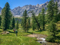Group Of Hikers In A Green Meadow With Pine Trees, Queyras, The Alps Stock Image - 69459631