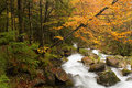 Autumnal Beech And Torrent Royalty Free Stock Photography - 6957937