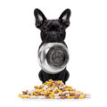 Hungry Dog With Bowl Royalty Free Stock Photography - 69538827