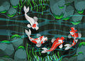 Four Fish Swimming In The Pond Royalty Free Stock Photography - 69546897