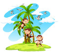 Three Monkeys On The Island Stock Images - 69546904