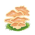 Heap Plate Of Mushrooms, Mushroom Family On Grass, An Icon With Stock Image - 69552991