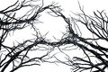 Tree Branches Isolated  On White Stock Photos - 69574413