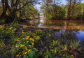 Caltha Palustris Blossoms On A River Stock Photography - 69584792
